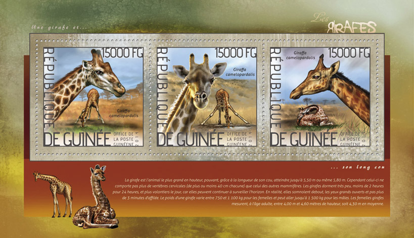 Giraffes - Issue of Guinée postage stamps