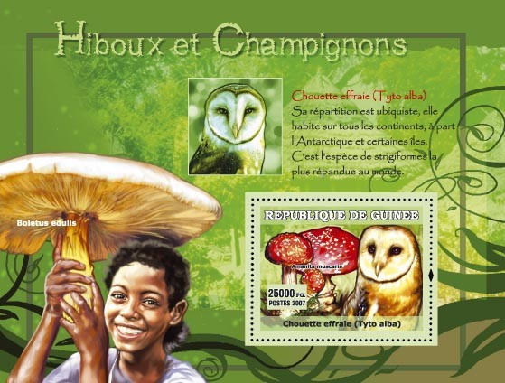 Tyto Alba / Chouette effraie, Boletus edulis - Issue of Guinée postage stamps