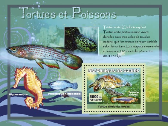 Tortue verte / Chelonia mydas - Issue of Guinée postage stamps