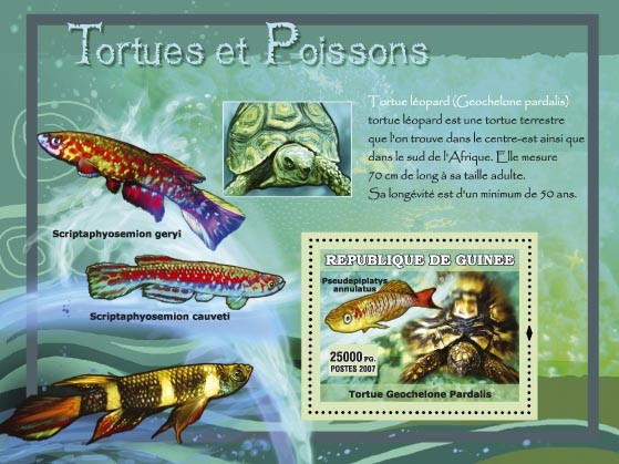 Tortue leopard / Geochelone Pardalis - Issue of Guinée postage stamps
