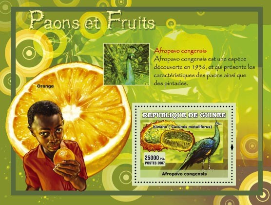 Afropavo congensis - Issue of Guinée postage stamps