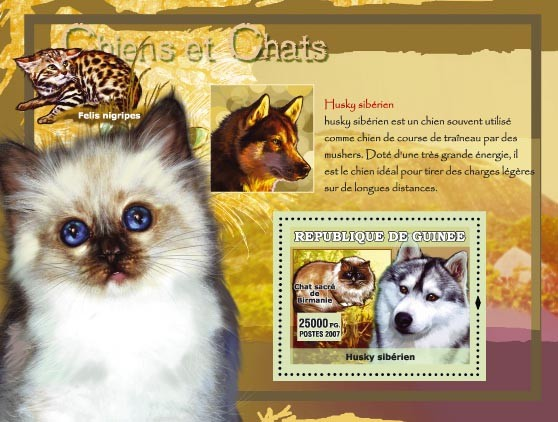 Husky Siberien / Siberian - Issue of Guinée postage stamps