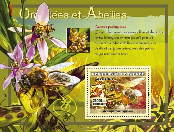 Acampe pachyglossa - Issue of Guinée postage stamps