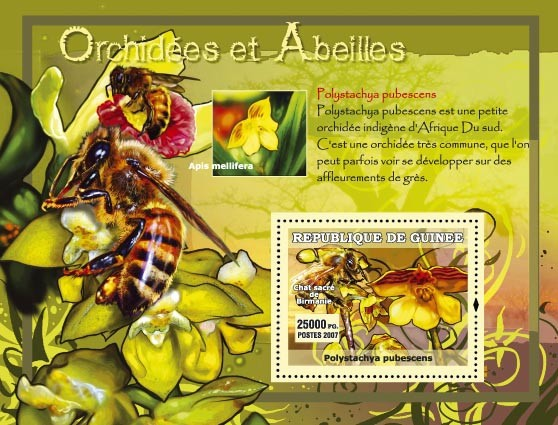 Polystachia pubescens - Issue of Guinée postage stamps