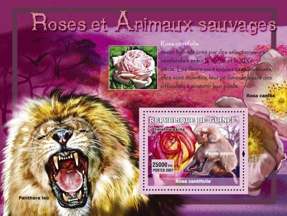Rosa Centifolia / Phantera Leo - Issue of Guinée postage stamps