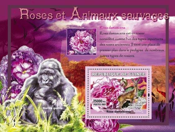 Rosa Alba / Gorila Gorila - Issue of Guinée postage stamps