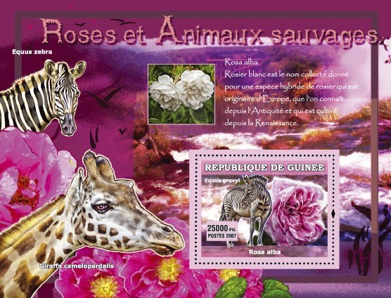 Rosa Damascena / Equus Grevyi - Issue of Guinée postage stamps