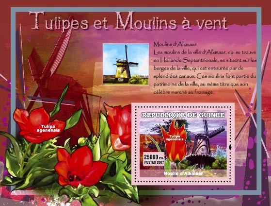 Moulin dAlkmaar / Tulipa agenensis - Issue of Guinée postage stamps