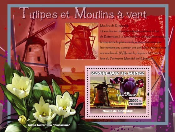 Moulin de Kinderdijk / Tulipa fosterlana  purissima - Issue of Guinée postage stamps