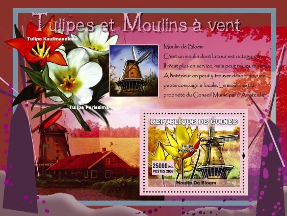 Moulin De Bloem / Tulipa Purissima - Issue of Guinée postage stamps