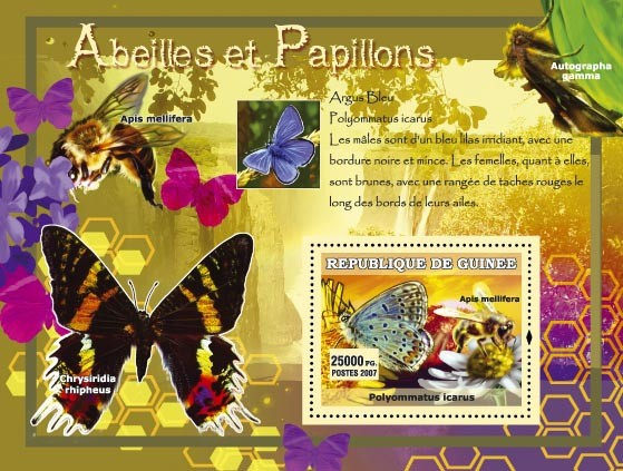 Argus Bleu / Chrisiridia rhipeus - Issue of Guinée postage stamps