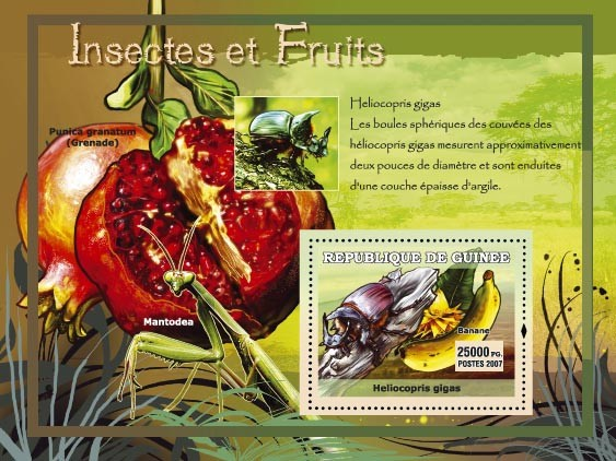 Helicopris gigas / Punica granatum - Issue of Guinée postage stamps