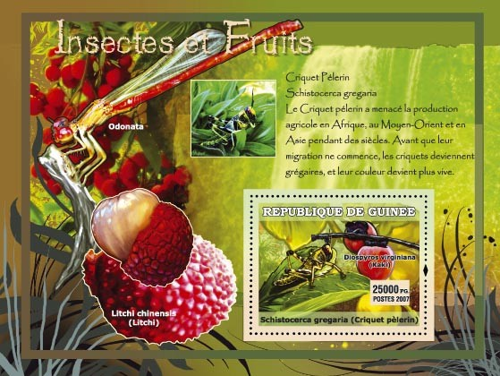 Criquet Pelerin / Litchi chinensis - Issue of Guinée postage stamps