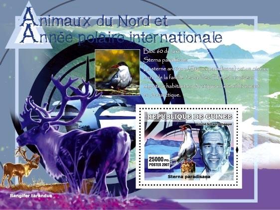 Sterna Paradisaea (bird) / Rangifer tarandus / A. Schwarzeneger - Issue of Guinée postage stamps