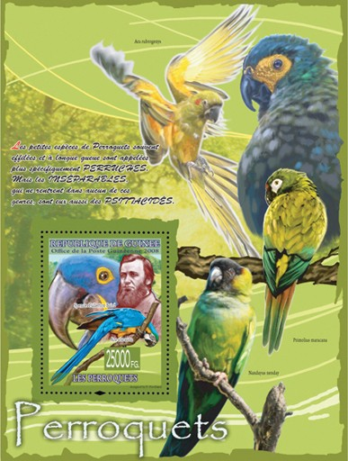 Parrots & Spencer Fullerton Baird - Issue of Guinée postage stamps