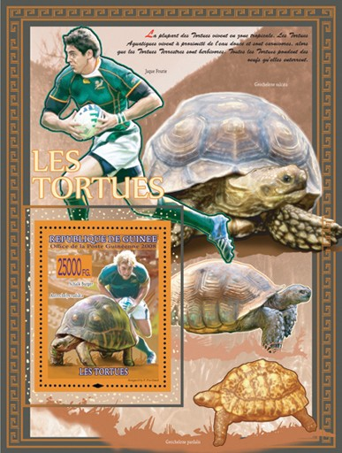 Turtles, Astrochelys radiata  & Rugby - Issue of Guinée postage stamps