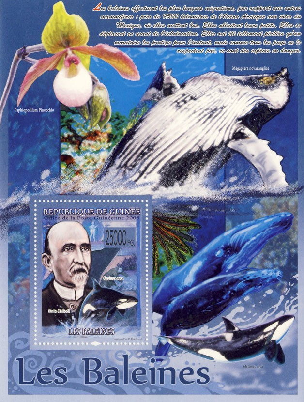 Whales, Orcinus orca, Carlo Collodi  (Orchids) - Issue of Guinée postage stamps