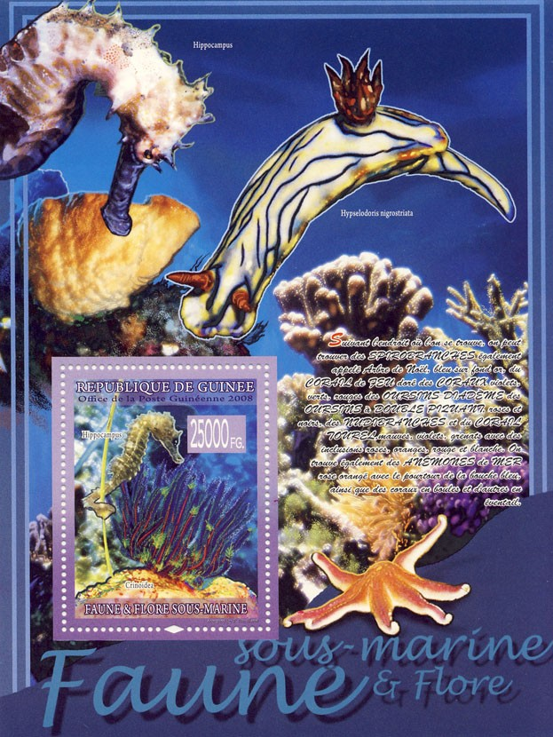 Underwater fauna, Sea Horse, Crinoidea  (Starfish) - Issue of Guinée postage stamps