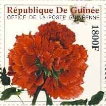 Peony Flower?�� ( Flower of China ) - Issue of Guinée postage stamps