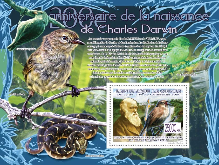 Bird Cethridea olivacea?タᆵ,  ( Birds & Snake) - Issue of Guinée postage stamps