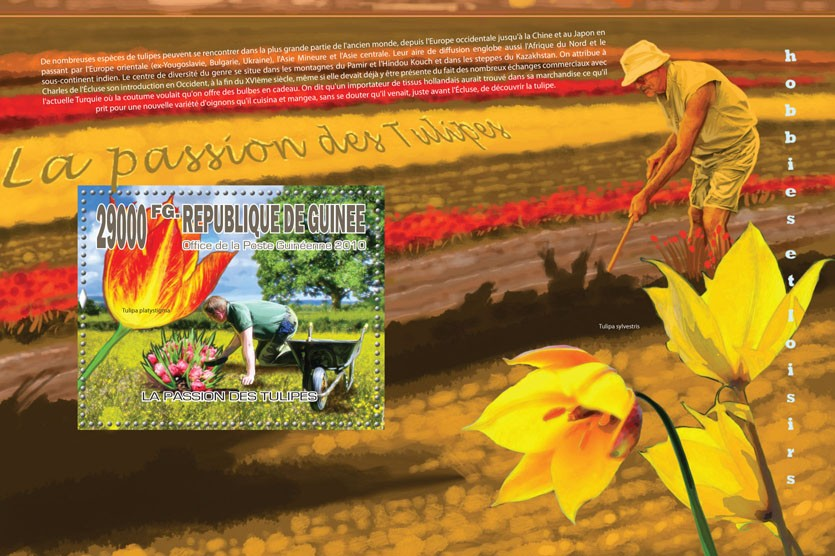 Tulips Passion (Flowers) - Issue of Guinée postage stamps