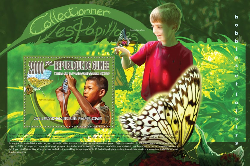 Collecting Butterflies - Issue of Guinée postage stamps