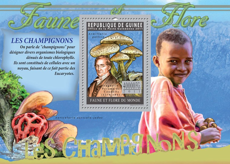 Mushrooms. - Issue of Guinée postage stamps