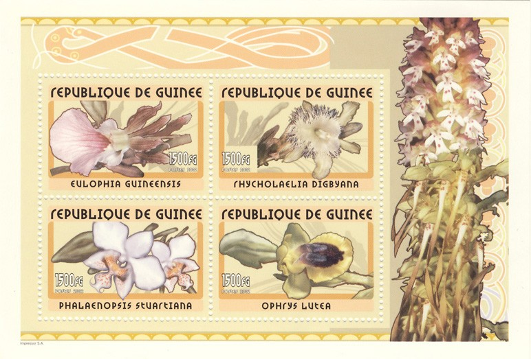 Orchids s/s - Issue of Guinée postage stamps
