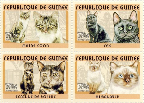 Cats 4v - Issue of Guinée postage stamps