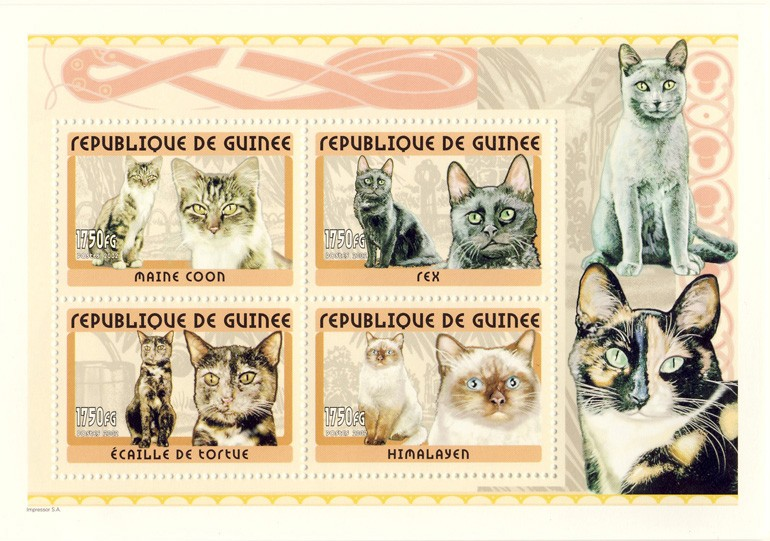 Cats s/s - Issue of Guinée postage stamps