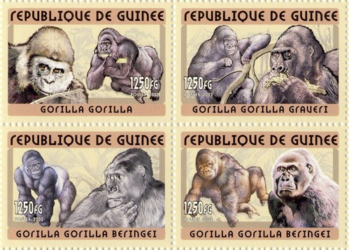 Gorilla 4v - Issue of Guinée postage stamps