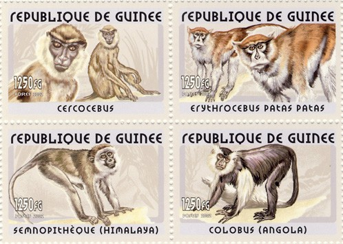 Monkeys 4v - Issue of Guinée postage stamps