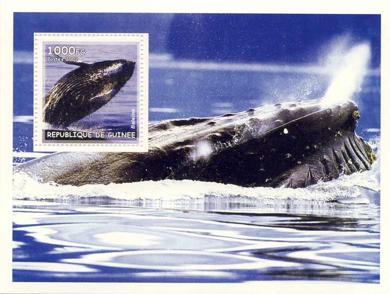 Whales s/s - Issue of Guinée postage stamps