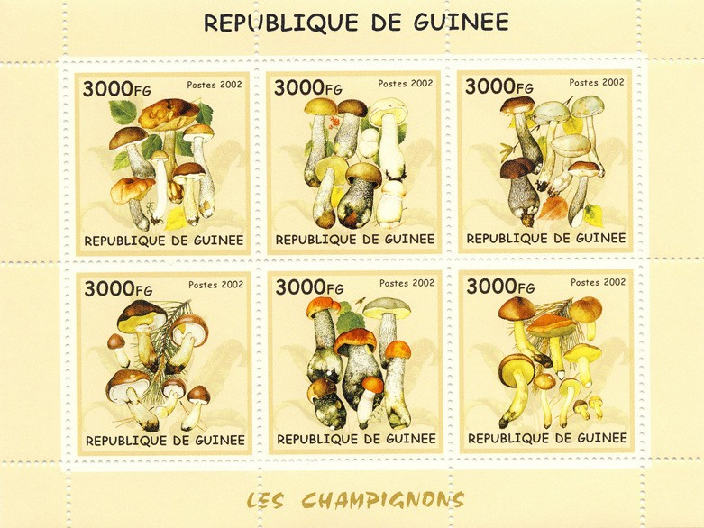 Mushrooms 6v - Issue of Guinée postage stamps