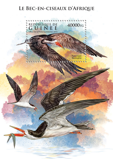 Skimmer (Rynchops flavirostris) - Issue of Guinée postage stamps