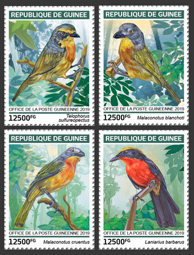 Bushshrikes - Issue of Guinée postage stamps