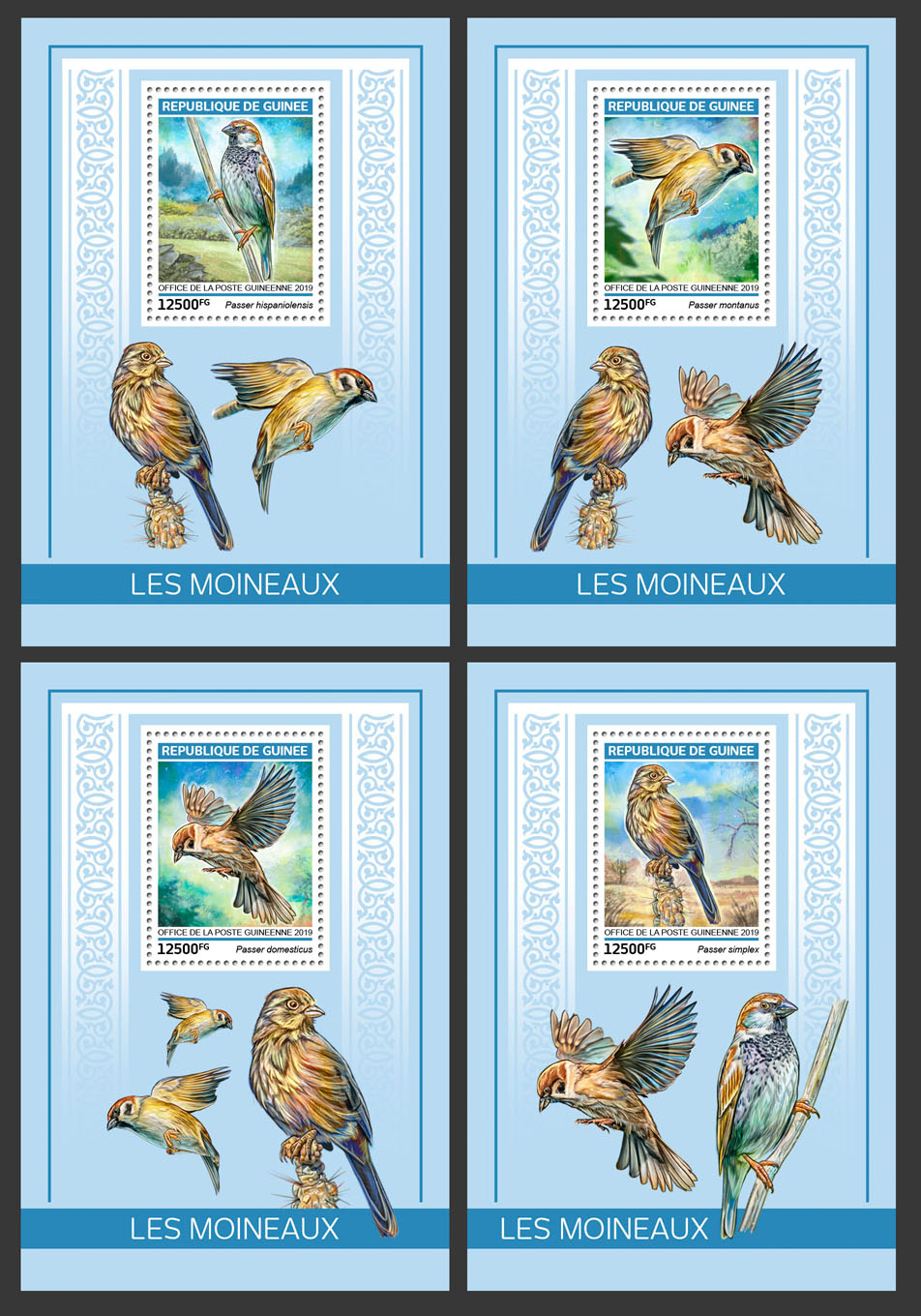 Sparrows - Issue of Guinée postage stamps