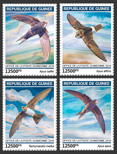 Swifts - Issue of Guinée postage stamps
