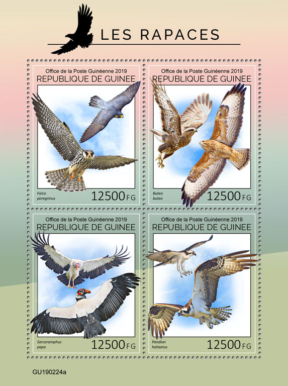 Birds of prey - Issue of Guinée postage stamps